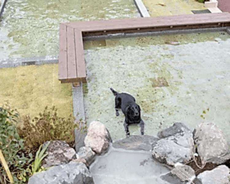 UFUFU VILLAGE   ウフフビレッジ ペットOKの水遊び場写真