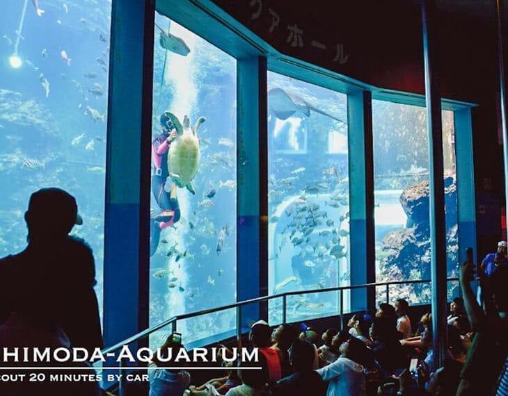 下田海中水族館 写真