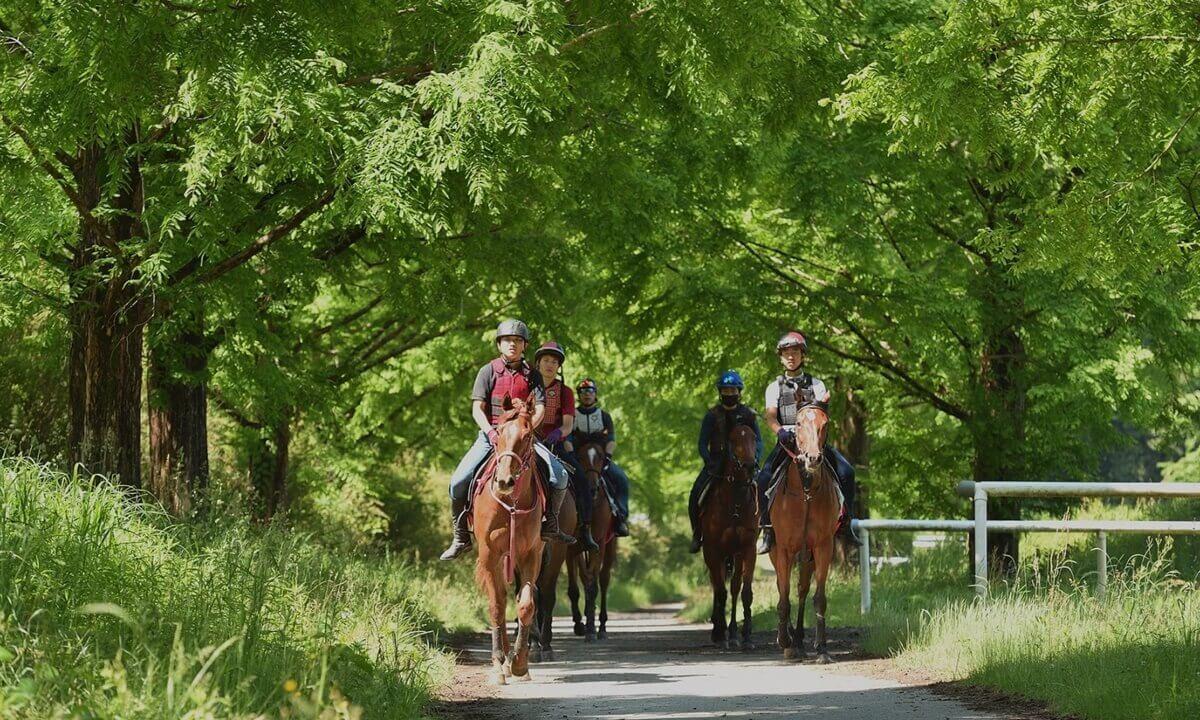 芳賀ファーム&グランピングではサラブレッド牧場が併設されている