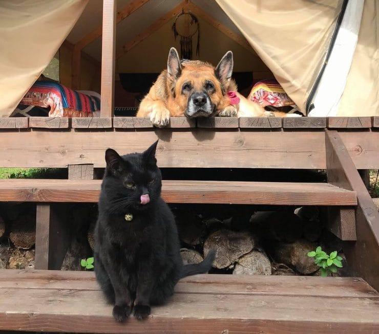 PAWS GROUNDはペットと一緒に宿泊できるグランピング施設